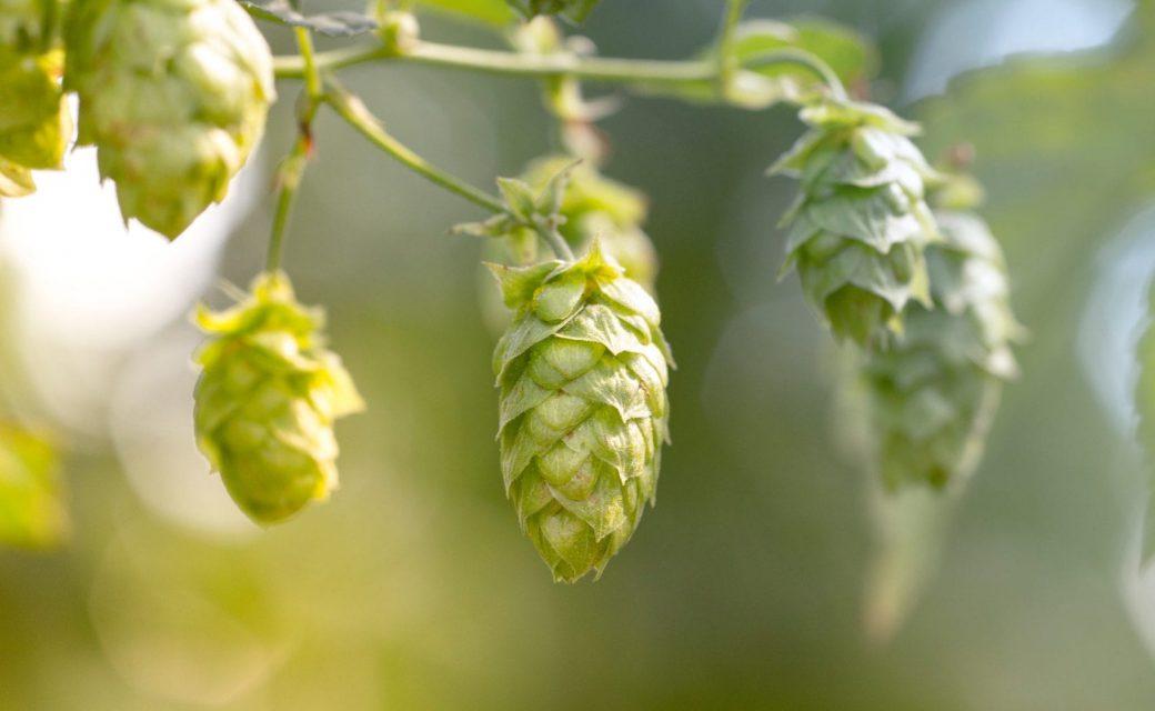 Op zoek naar een speciaal bier cadeau of meerdere bier cadeaus als personeelsgeschenk? Geef het nu en laat het de ander zelf de lekkerste speciaal bieren uitzoeken. cadeau voor de bierliefhebber.